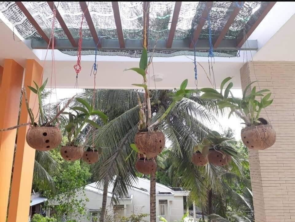 Coconut shell for plant