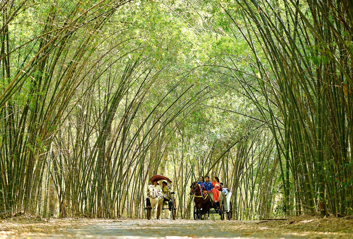 Vietnam bamboo