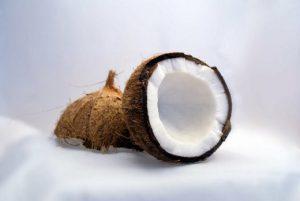 coconut tree benefits1